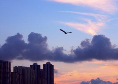 #觀海徑 #香港仔 #鴨脷洲
